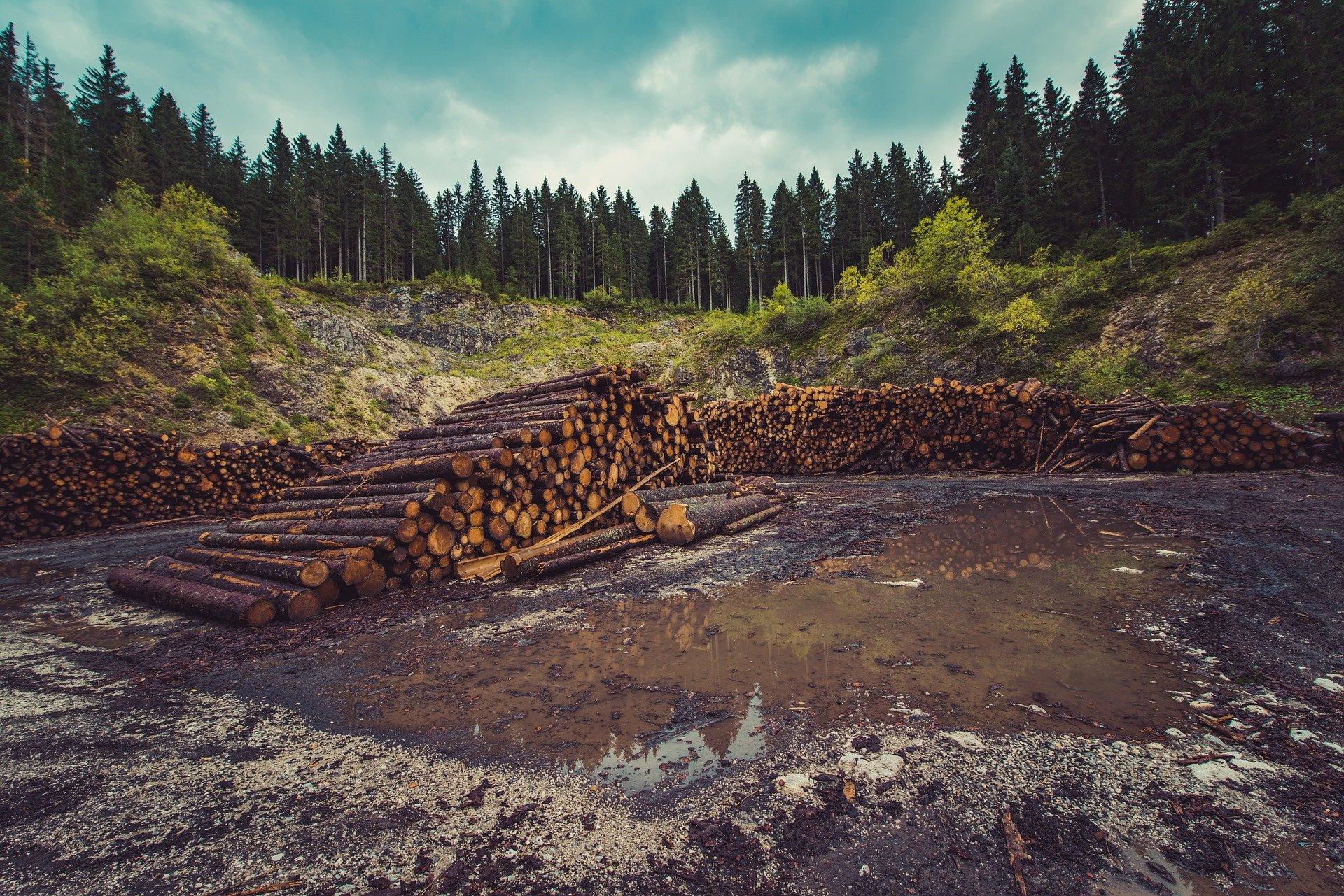 Pourquoi la lutte contre la déforestation est vraiment importante ?
